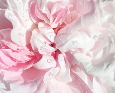 Range Eclat de rose