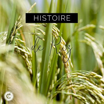 Le Riz est une céréale originaire d'Asie et plus particulièrement de Chine où sa culture remonte à l'époque néolithique (10000 ans avant J.C). En 320 avant J.C., Alexandre le Grand rapporte la culture du Riz en Grèce. Puis le Riz se propage petit à petit sur tous les continents. Aujourd'hui près de 2000 variétés de riz sont cultivées même si 90% de la production mondiale de Riz vient d'Asie. Le Riz est principalement utilisé dans l'industrie agroalimentaire mais il est également utilisé dans l'industrie cosmétique. La poudre de Riz, bien connue des geishas japonaises pour blanchir leur teint entre également dans la composition de nombreux produits cosmétiques. 🌾  #riz #ingredient #act #bienfait #asie #poudrederiz #rizbio