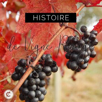 La Vigne Rouge est une plante à tige grimpante munie de vrilles dont le nom provient de son feuillage qui prend une couleur rouge à l'automne. Sa culture est très ancienne car déjà les égyptiens, les grecs et les romains la cultivaient pour son fruit comestible, le raisin, mais également pour les vertus thérapeutiques des différentes parties de la vigne (fruit, feuilles, sarment). Aujourd'hui la Vigne Rouge est cultivée dans les régions tempérées et est principalement utilisée dans le domaine de l'alimentaire, de la phytothérapie et de la cosmétique. 🍇  #actif #ingredient #raisin #fruit #vignerouge #vigne