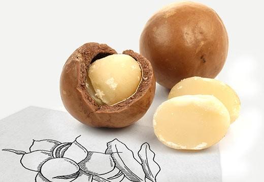 La noix de macadamia